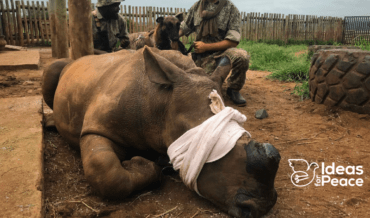 The Rhino Wars and Alternatives in South Africa